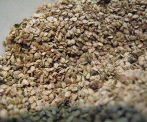 semena-sanberri 2