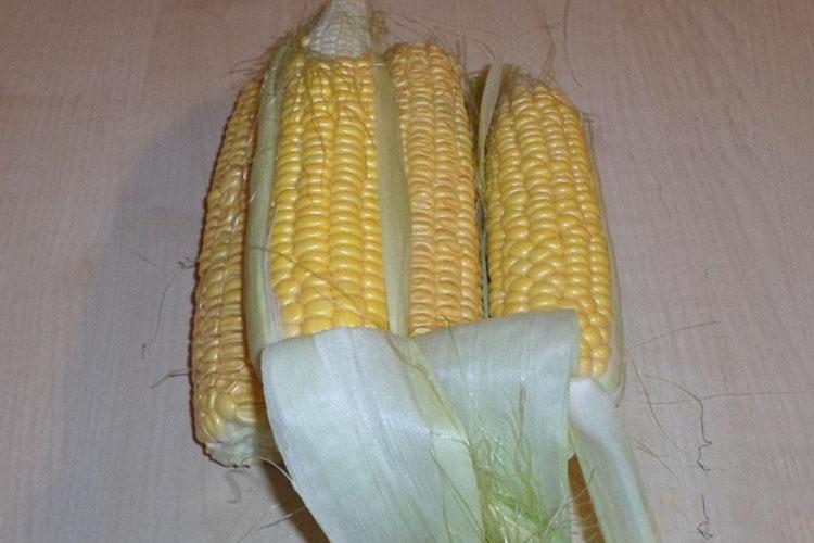 varennaya-kukuruza-v-mikrovolnovke-na-paru 5